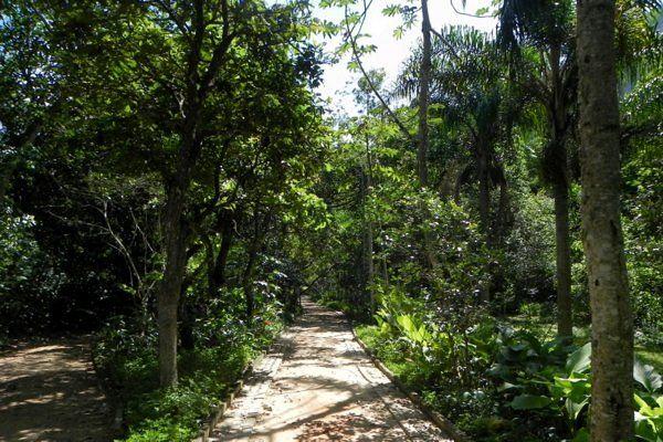 Sendero entre la mata atlántica Parque da Prainha Rio de Janeiro