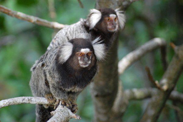 viajar a Río de Janeiro fauna salvaje