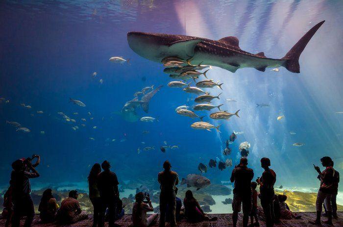 aquario-acuario-de-rio-de-janeiro