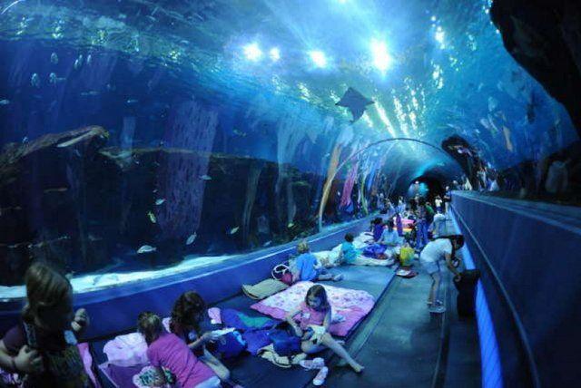 Durmiendo entre tiburones en Aquario el Acuario de Río de Janeiro